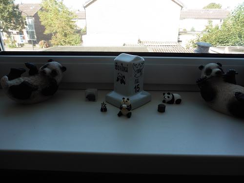 panda_window